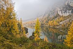 And there it was (Kadu Flyer) Tags: lake dolomites italy fog mist rain autumn fall mountain trees lagofedera crodadalago larch