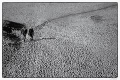 De strandwandeling (fredbervoets.com) Tags: voetafdrukken tracks track strandwandeling strandwandelaars strandbeeld stel spoorspoorlijn samen noordzeestrand buiten zee zandvoortaanzee zandvoort zand wandelen strand sporen recreatie pad actief fredbervoets beach holland netherlands beachwalk