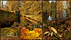 Autumn at its best 2 (wilma HW61) Tags: collage photoborder herfst herbst autumn automne autunno fall najaar nederland niederlande netherlands nikond90 natuur nature natur naturaleza vosbergen landgoedvosbergen herfstkleuren gelderland veluwe holland holanda paysbas paesibassi paísesbajos europa europe landscape landschap landshaft landgoed estate domain property outdoor wilmahw61 wilmawesterhoud