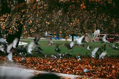 20191107-DSC02263-2 (Emma Bak) Tags: sweden nature people car ocean forest birds landscape sonya6000 evening edit elder fog fantasy fireplace sunset sun skies atmosphere architecture amazing beach neon