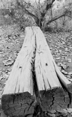 bench (C*2*) Tags: ilford hp5 nevada carson river camping fourwheelcampers bw blackandwhite