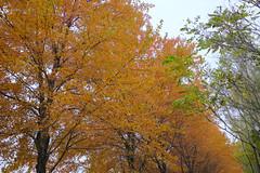 Cloudy Colors - Autumn (Modkuse) Tags: autumn colors colorful trees tree art nature natural artistic autumnleaves autumncolors photoart treescape autumncolor artisticphotography natureart artphotography sooc fall forest fallcolor fallcolors velvia fujifilm nopostprocessing straightoutofcamera xt2 xf1024mmf4rois fujinonxf1024mmf4rois fujifilmxt2 fujifilmxt2velviasimulation fujifilmxt2velvia