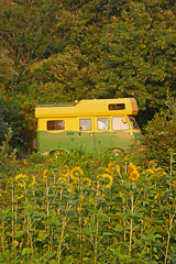 Barrettali - Conchiglio (SyndromeDeStendhal) Tags: corse corsica capcorse barrettali conchiglio conchigliu tournesols sunflower