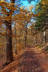 2019 Indian summer path (jeho75) Tags: sony rx100m3 zeiss deutschlandgermany harz wernigerode landscape forest waldweg path fall autumn herbst laub indian summer