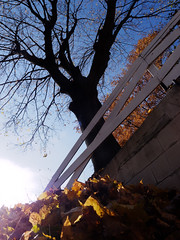 TW706: autumn oblation (2 of 2) (Thiophene_Guy) Tags: thiopheneguy originalworks olympusxz1 xz1 autumn utata:project=tw706 thursdaywalk utatathursdaywalk