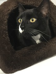 Boots - 8 year old neutered male