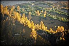 Golden ridge (Eng, Austria) (armxesde) Tags: pentax ricoh k3 österreich austria alps alpen mountain berg karwendel groserahornboden eng tirol engintirol herbst autumn