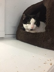 Cooky - 3 year old spayed female