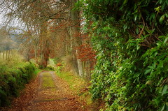The Spoutwell Road (eric robb niven) Tags: ericrobbniven scotland dunkeld perthshire cycling springwatch dundee
