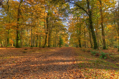 Footpath through the trees at Blackwater, New Forest (Art-G) Tags: blackwater newforest lyndhurst hampshire uk landscape woods trees forest canon eos7dmkii efs1018isstm 1018isstm sundaylights leaves autumn hdr photomatix