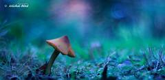 chapeau !! (studio gimi) Tags: champignon mushroom grosplan garden jardin proxy bokeh beyondbokeh vintagelens