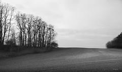 brandenburg (ralf k. lang) Tags: brandenburg acker landwirtschft misteln bäume feldrand feld bnw schwarzweis countryside landscape nature trees waldrand wood forest field