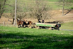 amish (bluebird87) Tags: amish wagon horses boys field nikon d7100