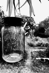 « l'air matinal délivrait ses lettres aux timbres incandescents... »Tomas Transtromer (woltarise) Tags: extrait poètesuédois tomastranstromer france paix lumière jardin harmonie seressourcer l'intimitéd'unlieupartagé marseille