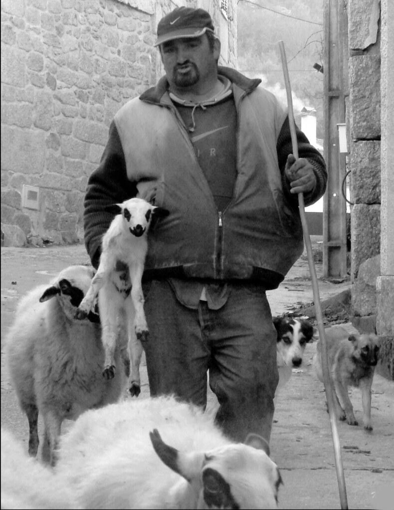Águas Frias (Chaves) - ... o pastor levando, pelo braço, o cordeiro que tinha acabado de nascer ...