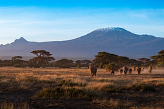 Elephants at sunrise in front of Kilimanjaro (Nicolas Hoizey) Tags: 27mm africa afrique amboseli amboselinationalpark fujifilm fujifilmxt2 fujinon fujinonxf27mmf28 kajiado kenya mammifères nationalpark parcnationaldamboseli xt2 animal elephant landscape mammal mammals mammifère pancake paysage éléphant valléedurift