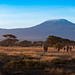 Elephants at sunrise in front of Kilimanjaro