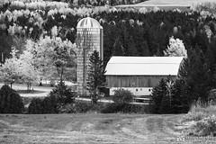 191016-061 Dans la campagne (clamato39) Tags: rural ferme farm barn grange blackandwhite bw noiretblanc monochrome olympus lotbinière provincedequébec québec canada