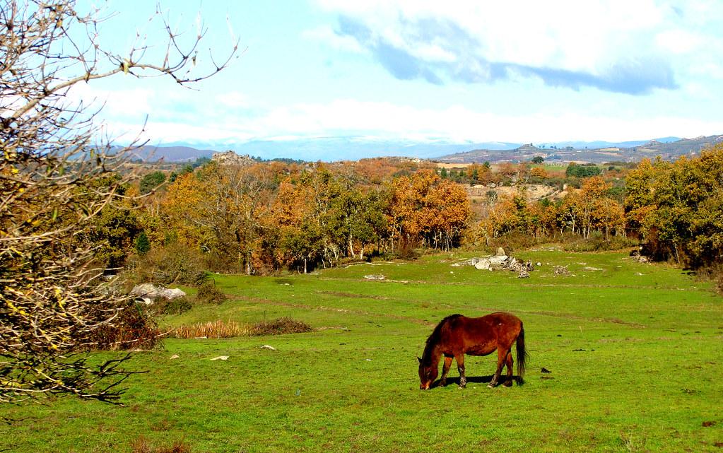 Águas Frias (Chaves) - ... o cavalo comendo a sua refeição de erva fresca rodeado de arvoredo com tons outonais