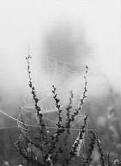 * (PattyK.) Tags: snapseed nikond3100 ioannina giannena giannina epirus ipiros balkans hellas ellada greece grecia griechenland whereilive autumn november 2019 ιωάννινα γιάννενα ήπειροσ ελλάδα βαλκάνια ευρώπη ηπόλημου ομίχλη φθινόπωρο fog
