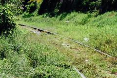 Overgrown Railroad Tracks, Cienfuegos Cuba (AdamCohn) Tags: adam cohn cienfuegos cuba overgrown railroad rails streetphotographer streetphotography tracks wwwadamcohncom adamcohn