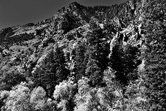 I Said to the Mountains Do Not Rise Above Me (Black & White) (thor_mark ) Tags: alpineloopdrive alpineloopscenicbackway americanforkcanyon anseladamslookfromcapturenx2 aspen aspenleaves aspentrees aspens autumncolors autumnleafcolors azimuth304 blackwhite blueskies canvas capturenx2edited centralwasatchrange colorefexpro colorofleaves coloroftrees day8 hillsideoftrees landscape leafcolors lookingnw mountainpeak mountains mountainsindistance mountainsoffindistance mountainside multitudeofplantleafcolors nature nikond800e outside populustremuloides portfolio project365 quakies quakingaspen ridgeline ridge ridges rockymountains stateroute92 sunny timpanogoscavenationalmonument trees utahhwy92 utahnationalparks2017 utahstateroute92 wasatchrange westernrockymountains timpanogoscavenationalmonumen utah unitedstates