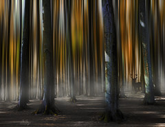 Fairytale Forest III (Monika Müthing) Tags: blur autumn forest fog deer brown nature beeches galleryofdistinguishedartists