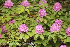 Fellows Riverside Gardens (73) (Framemaker 2014) Tags: fellows riverside gardens mill creek park youngstown ohio northeast united states america