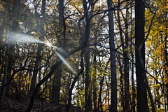 Rock Creek Park (dckellyphoto) Tags: rockcreekpark washingtondc 2019 districtofcolumbia fall leaves trees woods forest park dc light