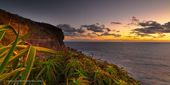 on the cliffs (donnnnnny) Tags: bangalleyheadland bangalley northshore avalon nsw australia cliffs sea rock dawn