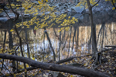 Rock Creek Park (dckellyphoto) Tags: rockcreekpark washingtondc 2019 districtofcolumbia park water dc fall autumn stream