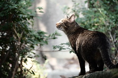 direction of light (Sat Sue) Tags: olympus micro four thirds m43 penf japan fukuoka kasuga park stray cat
