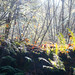 Edge of stream bed - Hazy Autumn Morning Light