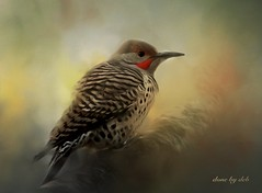 Misty Morning (done by deb) Tags: digitalbirdart digitalart digitalpainting flicker northernflicker jixipix pastello