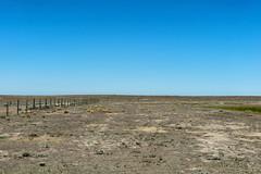 Drought Landscape (Bracus Triticum) Tags: drought landscape アルバータ州 alberta canada カナダ 8月 八月 葉月 hachigatsu hazuki leafmonth 2019 reiwa summer august