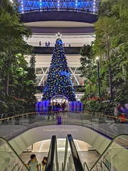 Christmas Tree in The Jewel at Singapore Airport (tomquah (busy period)) Tags: explore jewel christmastree