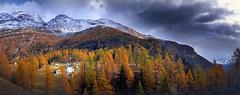 aria alta (art & mountains) Tags: alpi alps confine vallese lepontine gruppomonteleone hiking alpeggio baite natura silenzio contemplazione pizzi frizzi lazzi mazzi fall bosco red esc esp vision dream spirit