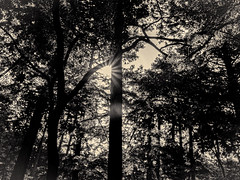 杲 2019 - 1 - 11 (Stéphane Barbery) Tags: akiraka arbre japan japon kyoto momiji soleil 京都 日本 杲