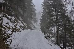 DSC_0016 (Bergwandern Alpen) Tags: alpen alps bergwandern hiking schnee winter winterlandschaft waldweg bergwald nadelwald mountainforest mountaintrail nebel fog