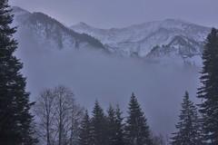 DSC_0024 (Bergwandern Alpen) Tags: alpen alps bergwandern hiking raminerwald katonglarus nebel bewölkung schneefall schnee bergwald nadelwald snow schneelandschaft winterlandschaft winterlandscape