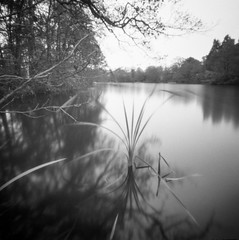 The Water Margin: Reed (Richie Rue) Tags: pond lake reed water plant flora watermargin pinhole lensless mediumformat square 6x6 120 foma fomafomapan100 longexposure rodinal outdoors blackandwhite monochrome bnw bw mindfulphotography contemplativephotography