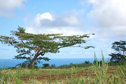 Seaside Tree