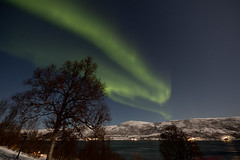 BA0I9566 (Clare Forster) Tags: tromso norway arctic winter november 2019 aurora aurorahunting northern lights