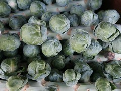 Season Colours - Brussels Sprouts (Pushapoze (MASA)) Tags: brusselssprouts