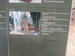 Plant  information, Detail  Parodia (d.kevan) Tags: plants arganzuelahothouse madrid zonadesértica1 description photos origin species commonname family