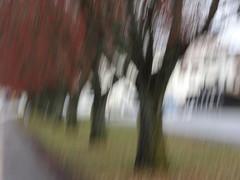 Rainy day... (evisdotter) Tags: autumnrainydays höstdag icm intentionalcameramovement nature sooc uppsala