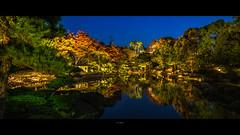 _DSC6685 (kblover24) Tags: sony a7r mk3 a7r3 a7riii riii fe loxia 21 21mm f28 carl zeiss 名古屋 nagoya 白鳥庭園 explored