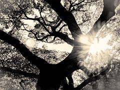 杲 2019 - 1 - 16 (Stéphane Barbery) Tags: akiraka arbre japan japon kyoto momiji soleil 京都 日本 杲