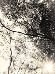 杲 2019 - 1 - 28 (Stéphane Barbery) Tags: akiraka arbre japan japon kyoto momiji soleil 京都 日本 杲