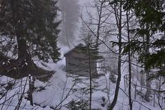 DSC_0017 (Bergwandern Alpen) Tags: alpen alps bergwandern hiking schnee schneefall nadelwald wald schneelandschaft waldhütte berghütte mountainhut hut snow winter winterlandscape